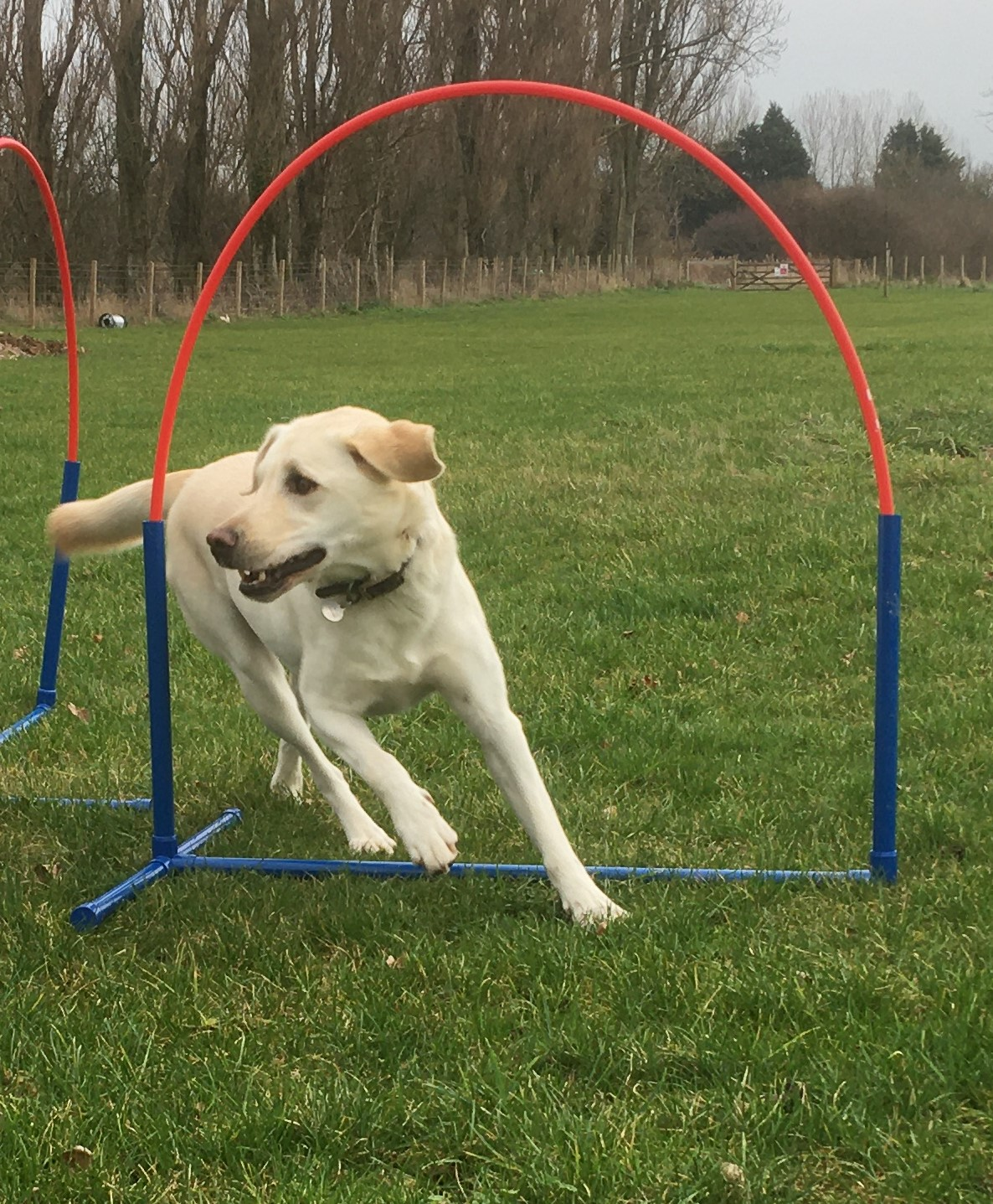 New for February 2020 - a new venue and introducing canine hoopers